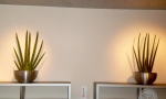 biodecoration